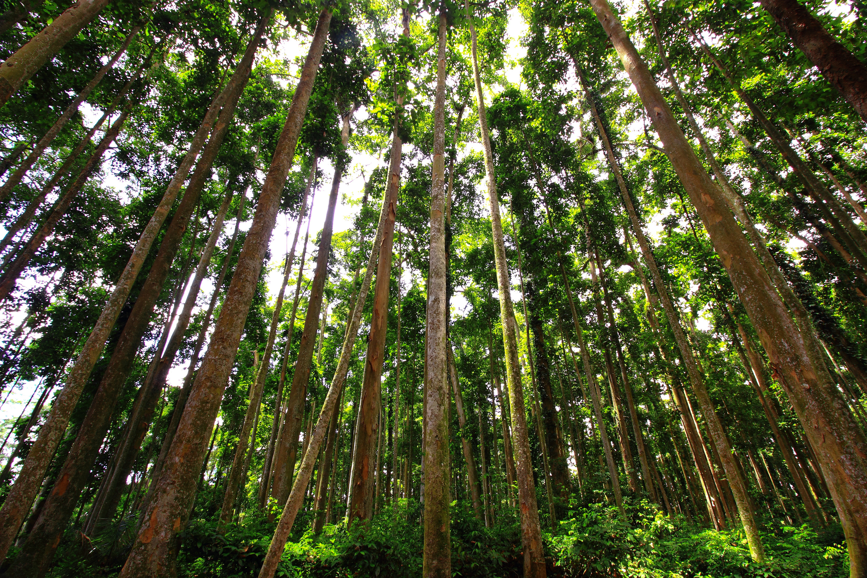 Experience The Tropical Rainforest Landau Forte Academy